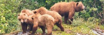 Wildlife in Gustavus Alaska